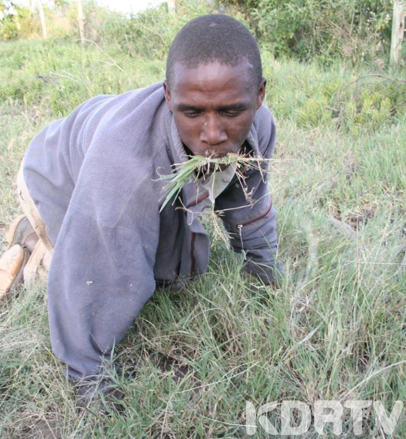 Thieves eat grass